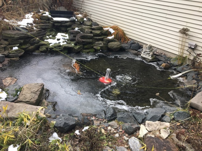 pond with koi at winter